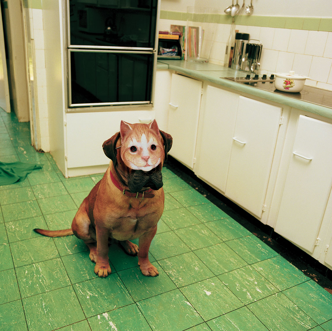 Dog with Cat Mask.jpg